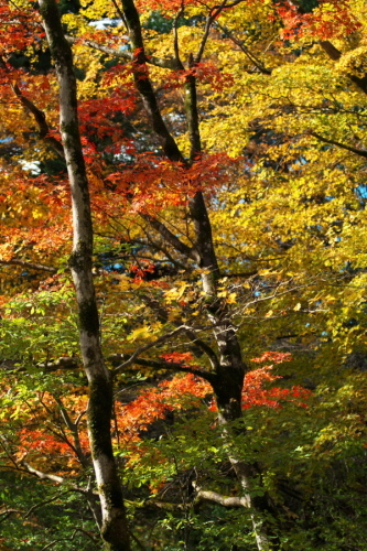 日光 日光植物園の秋3_a0263109_22182510.jpg
