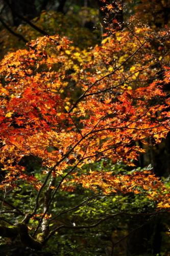 日光 日光植物園の秋3_a0263109_22182554.jpg