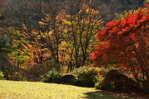 日光 日光植物園の秋3_a0263109_22182599.jpg