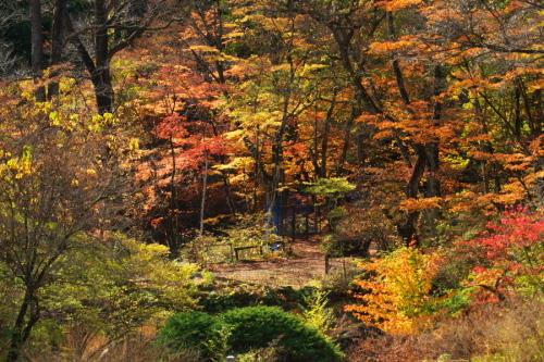 日光 日光植物園の秋3_a0263109_22182643.jpg