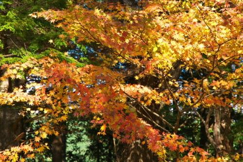 日光 日光植物園の秋3_a0263109_22190208.jpg