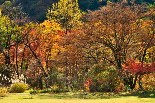 日光 日光植物園の秋3_a0263109_22190210.jpg