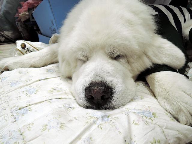 犬と暮らすクリエーター展_c0062832_17272851.jpg