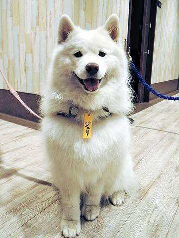 犬と暮らすクリエーター展_c0062832_17290837.jpg