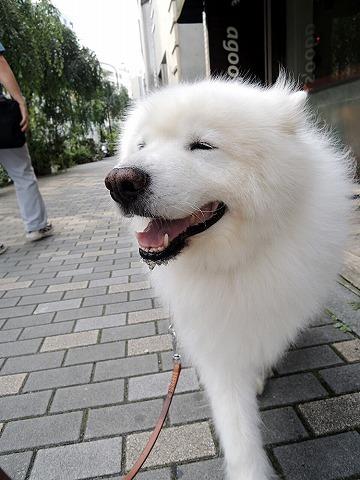 犬と暮らすクリエーター展_c0062832_19090921.jpg