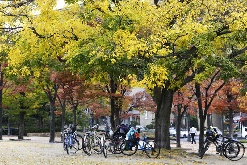 中央公園の秋 2019_d0246136_23172271.jpg