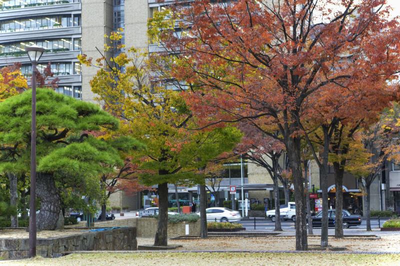 中央公園の秋 2019_d0246136_23174233.jpg