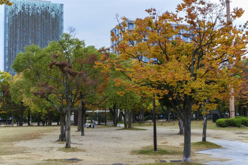 中央公園の秋 2019_d0246136_23182239.jpg