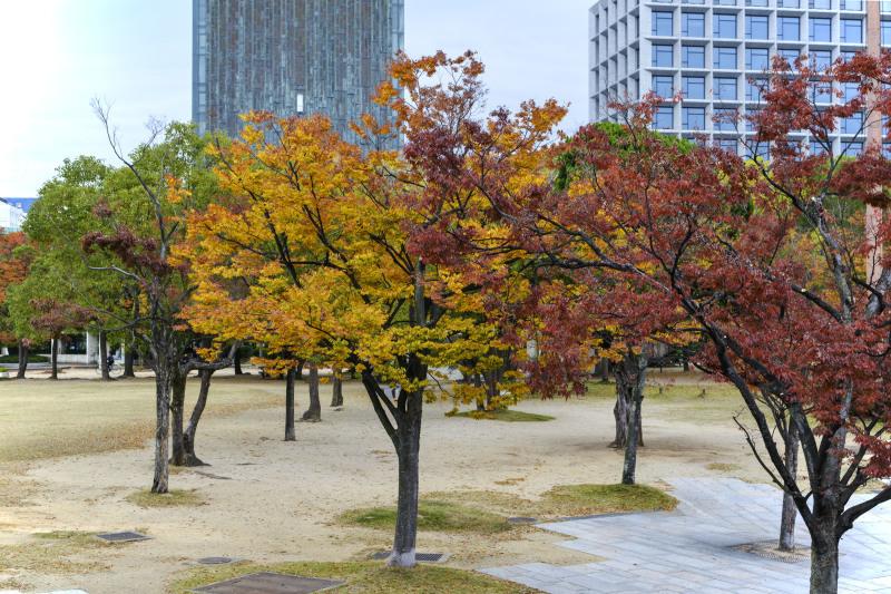 中央公園の秋 2019_d0246136_23184034.jpg