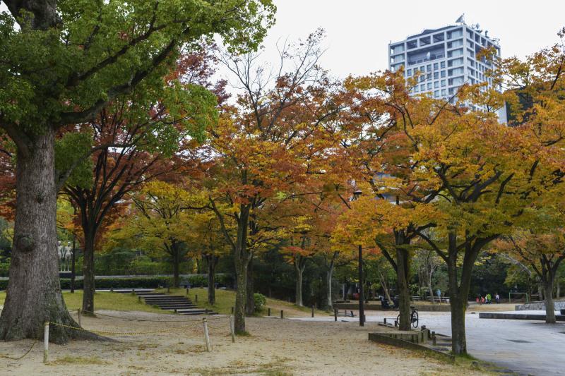 中央公園の秋 2019_d0246136_23185335.jpg