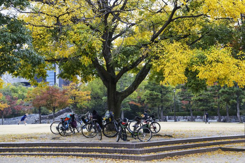 中央公園の秋 2019_d0246136_23192091.jpg