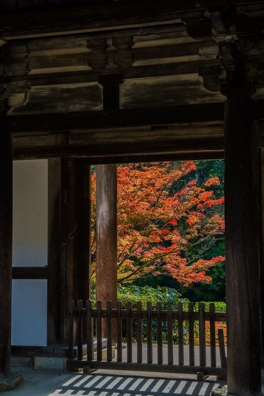 2019奈良紅葉~円成寺_e0363038_21341786.jpg