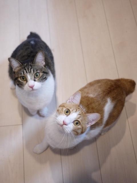 猫のお留守番 まさおくんゆきおくん編。_a0143140_22372825.jpg
