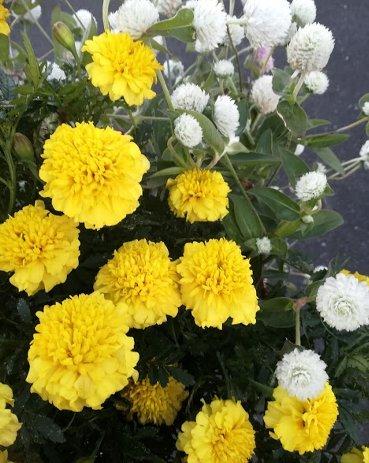 今週の花と、なぜか枕の話。_b0149340_19044543.jpg
