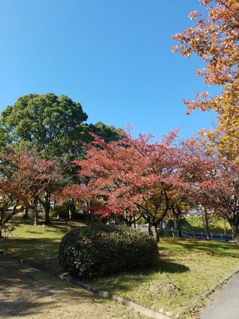 紅葉と食欲の秋♪_c0179841_13533638.jpg