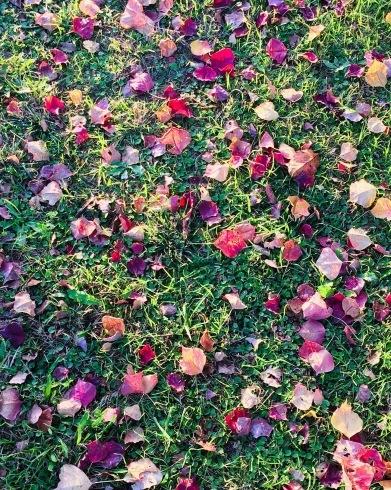 11月ー秋の色ー_f0206741_16572144.jpeg