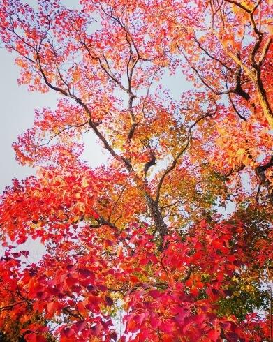 11月ー秋の色ー_f0206741_16582411.jpeg