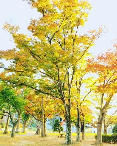 11月ー秋の色ー_f0206741_16584744.jpeg