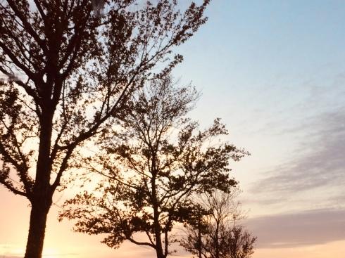 11月ー秋の色ー_f0206741_17143165.jpeg