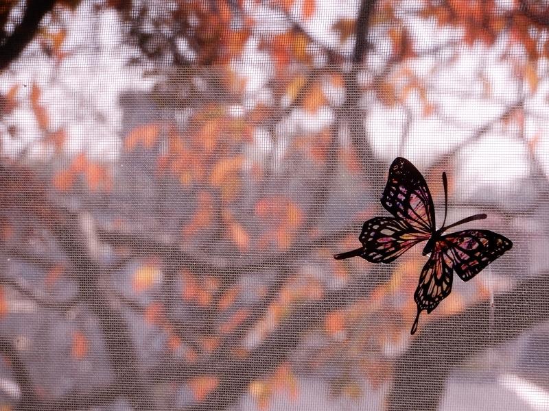 秋の館のアートフェスタ(上)* Gakuenmae Art Festa1_f0374041_13102144.jpg