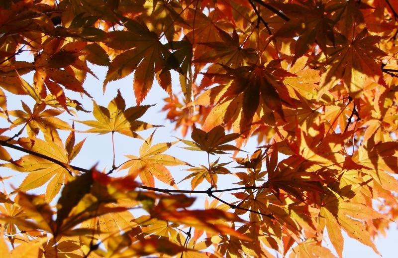 秋の館のアートフェスタ(下)* Gakuenmae Art Festa3_f0374041_13502850.jpg