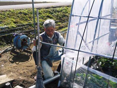 完熟紅ほっぺ 順調に育つ栽培ハウスの様子(2019)と減農薬栽培のこだわり 12月上旬からの出荷です!_a0254656_16493749.jpg