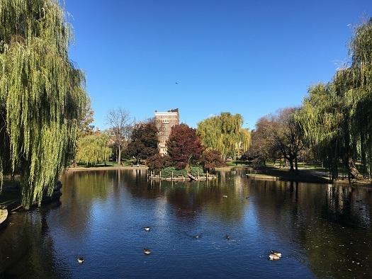 11月6・7日 ボストン「和三盆ワークショップ」_c0227958_08255308.jpg