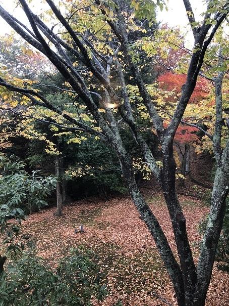 晩秋の箱根旅行 - 今日も食べようキムチっ子クラブ (料理研究家 結城奈佳の韓国料理教室)