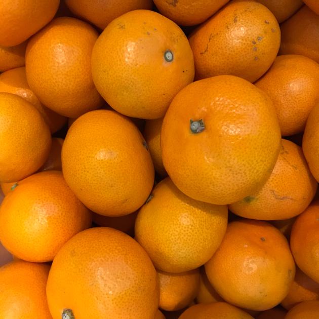 ビタミンと水分と甘みをようさん含んだ太陽。そして器用になっていくねこ。_b0016168_14171422.jpg
