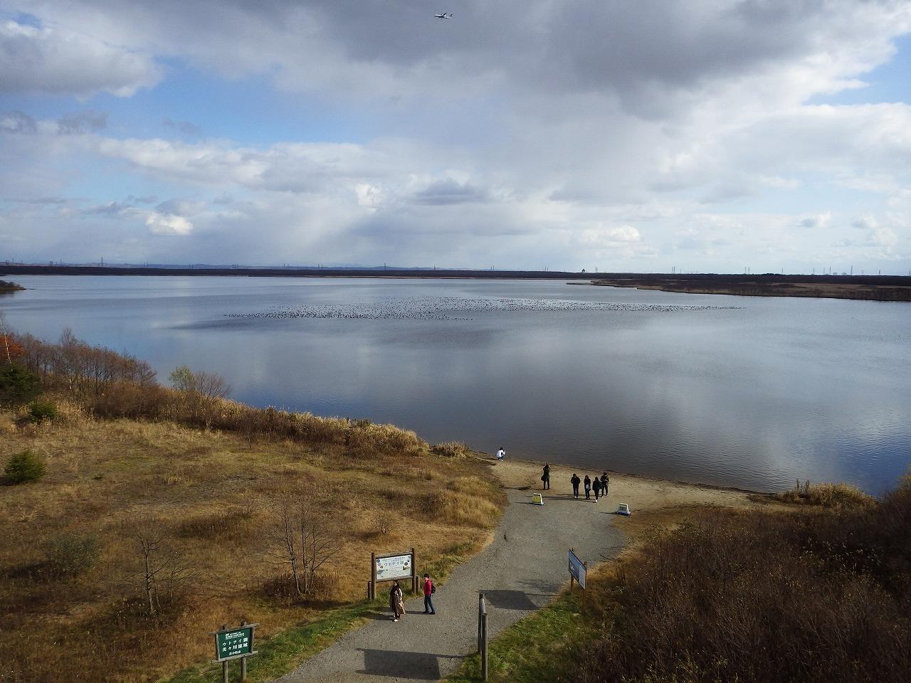 ★ウトナイ湖でマガンやオオワシを見てきました_e0046474_00261627.jpg