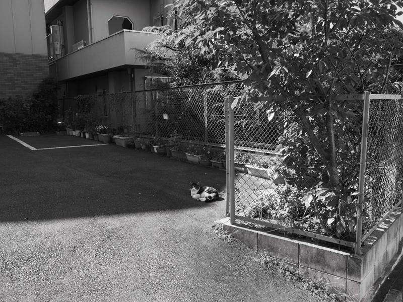 東大阪_f0167977_16104490.jpg