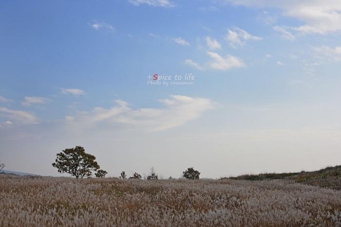 富士山とススキ_f0326278_21503129.jpg