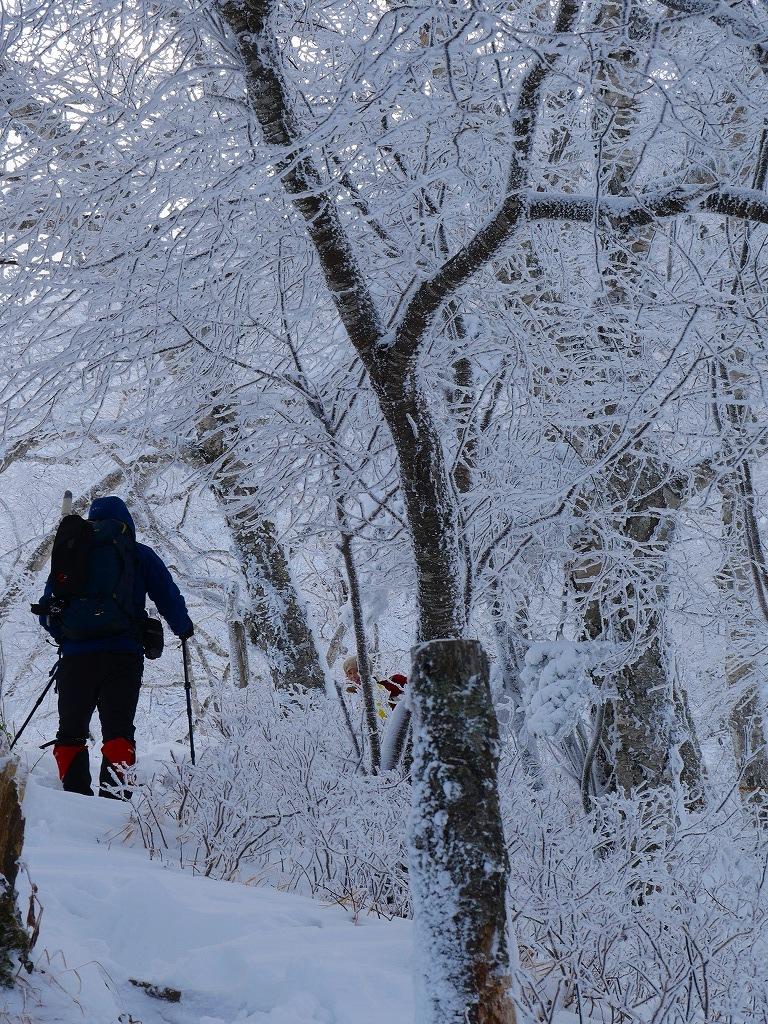 まるで厳冬期の風不死岳(1102m)、2019.11.17_f0138096_12152327.jpg