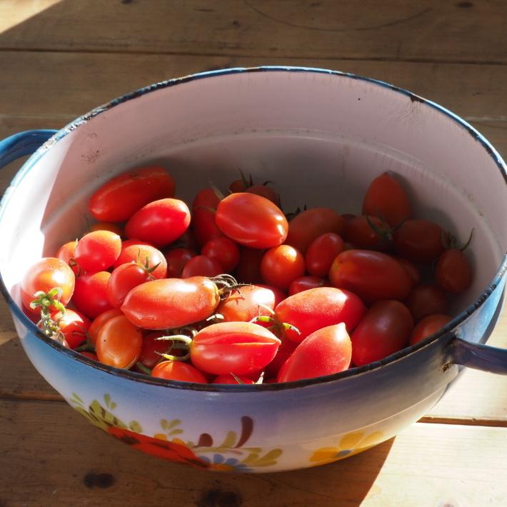 サンマルツァーノリゼルバの収穫_b0378101_21582342.jpg