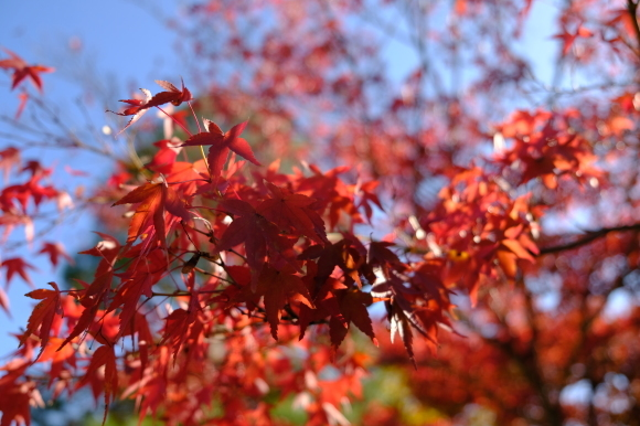 京都の旅 \'19 秋_e0000910_12405357.jpg