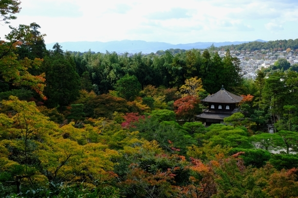 京都の旅 \'19 秋_e0000910_14423416.jpg