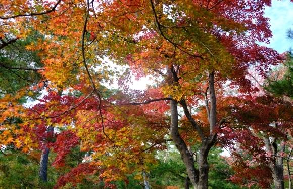 京都の旅 \'19 秋_e0000910_15115801.jpg