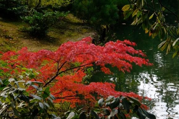 京都の旅 \'19 秋_e0000910_15124195.jpg
