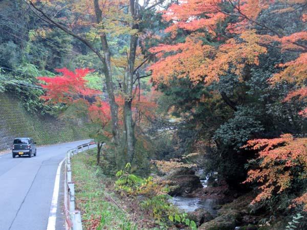 紅葉が盛り 鞍馬_e0048413_19535266.jpg