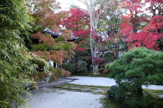 紅葉が盛り 南禅寺 天授庵_e0048413_21124467.jpg
