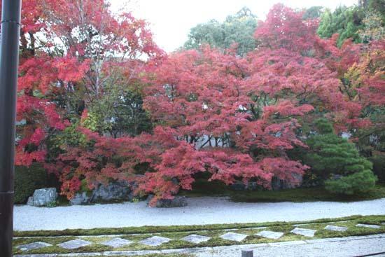 紅葉が盛り 南禅寺 天授庵_e0048413_21131445.jpg