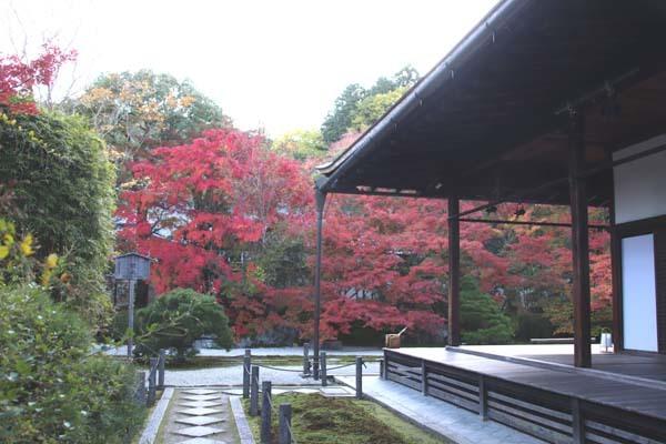 紅葉が盛り 南禅寺 天授庵_e0048413_21132968.jpg