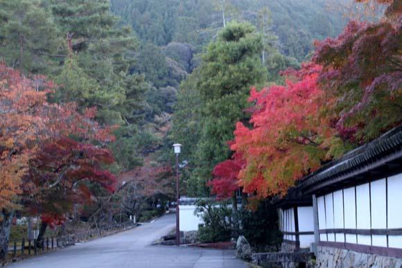 紅葉が盛り 南禅寺 天授庵_e0048413_21133732.jpg