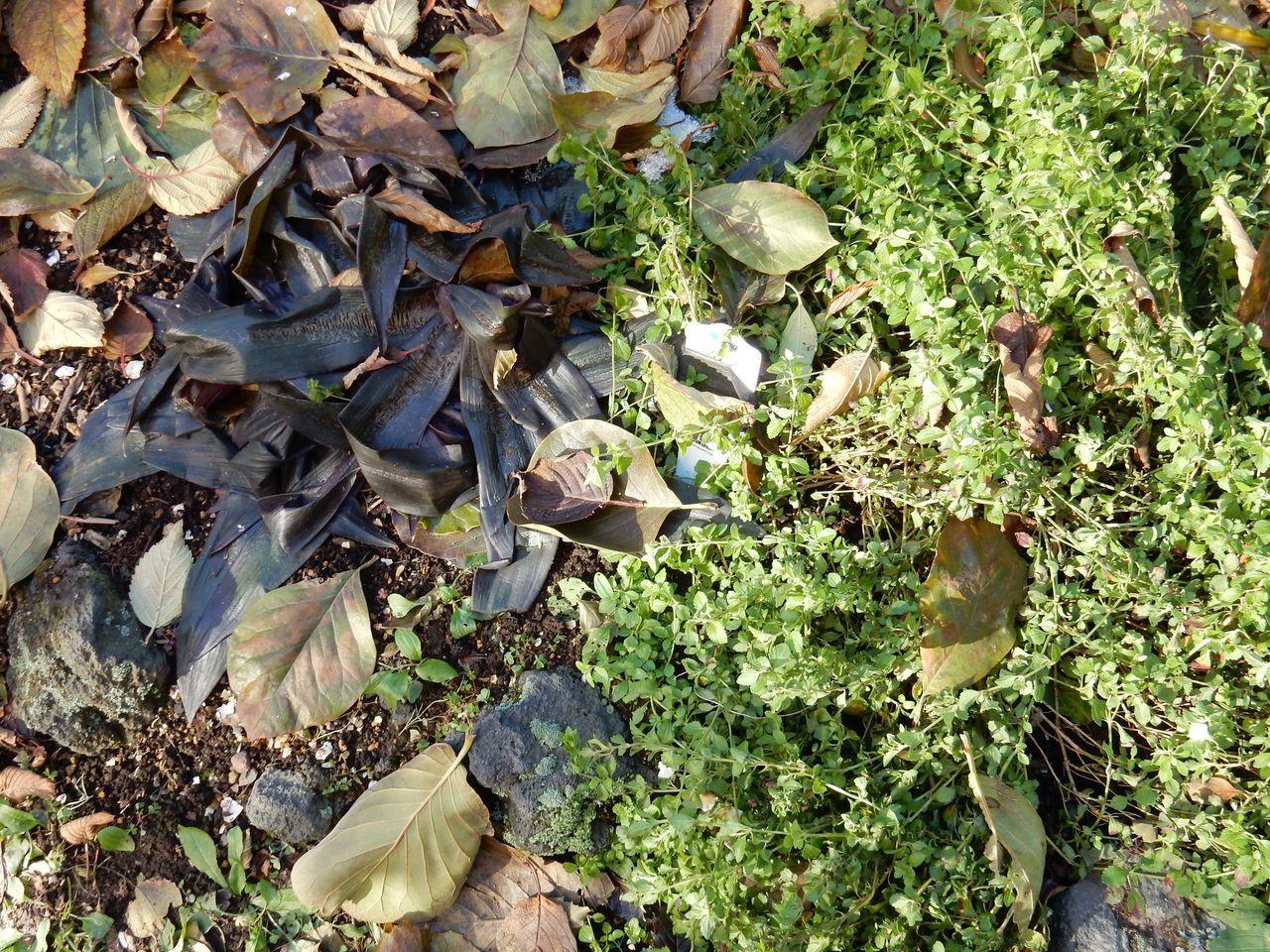 雪がなくなると、下からしおれた植物が顔を出した_c0025115_21514354.jpg