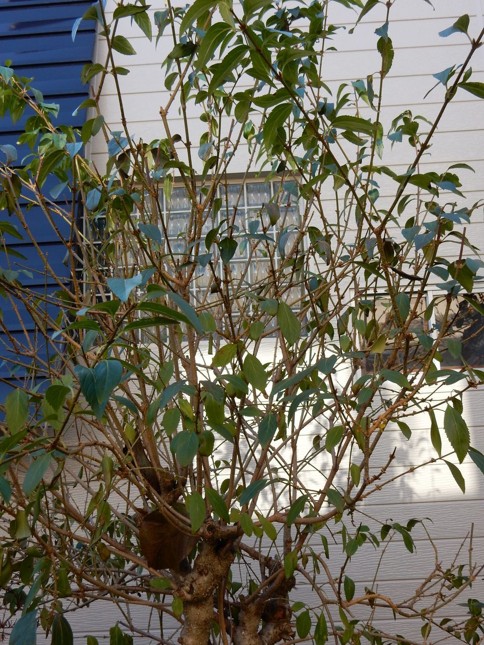 雪がなくなると、下からしおれた植物が顔を出した_c0025115_22014229.jpg