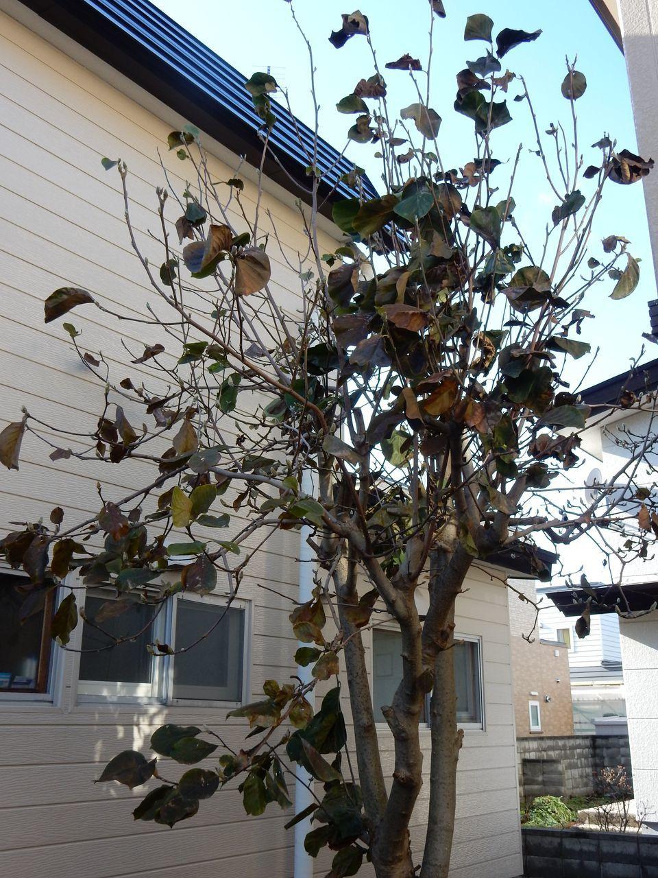 雪がなくなると、下からしおれた植物が顔を出した_c0025115_22023396.jpg