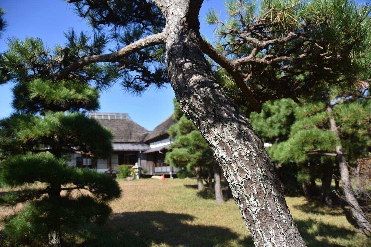 万代会館 松林に囲まれて・・・_d0065116_21292734.jpg