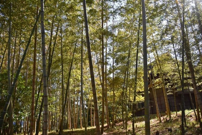 万代会館 松林に囲まれて・・・_d0065116_21370674.jpg