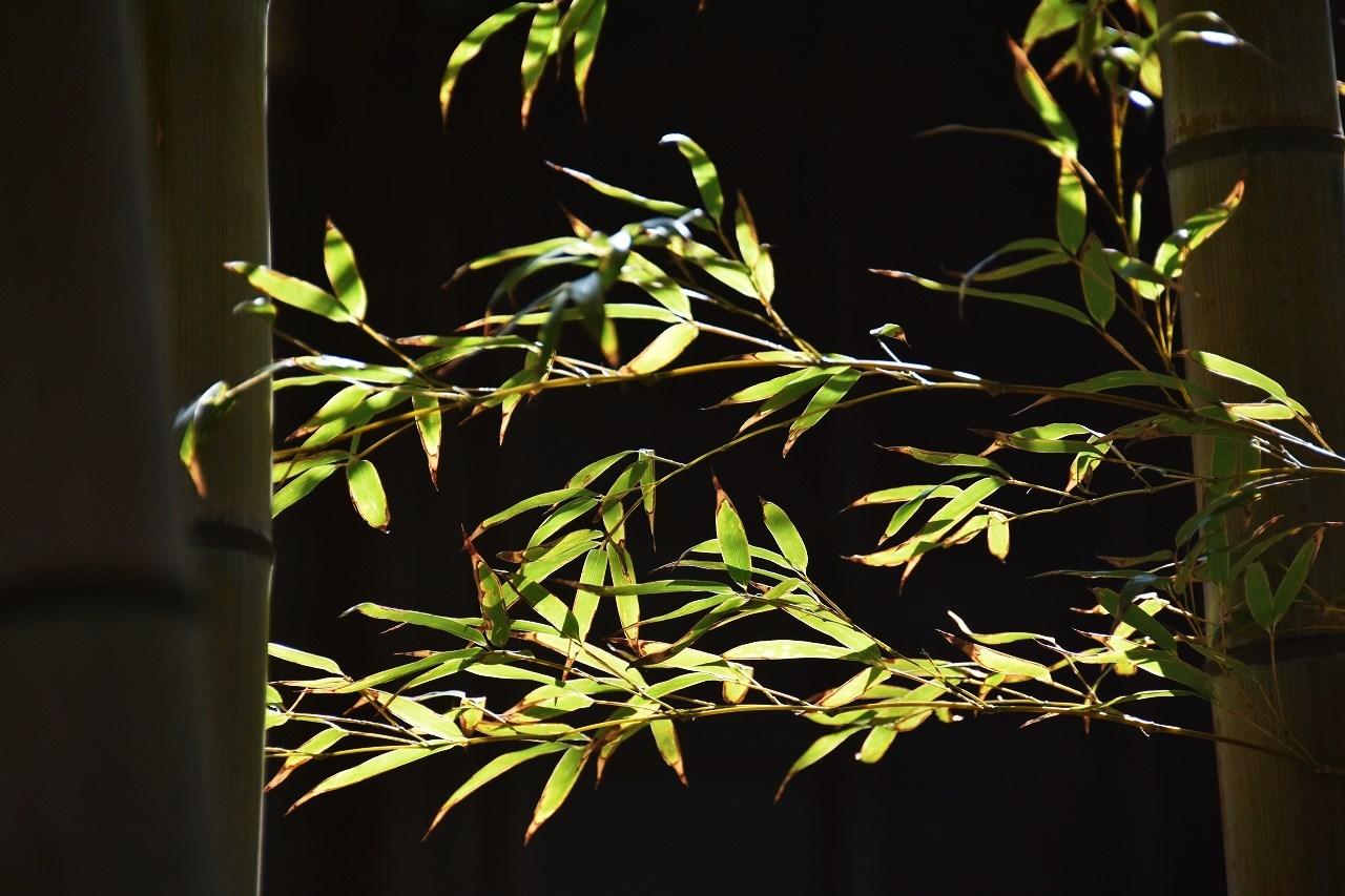 万代会館 松林に囲まれて・・・_d0065116_21374112.jpg