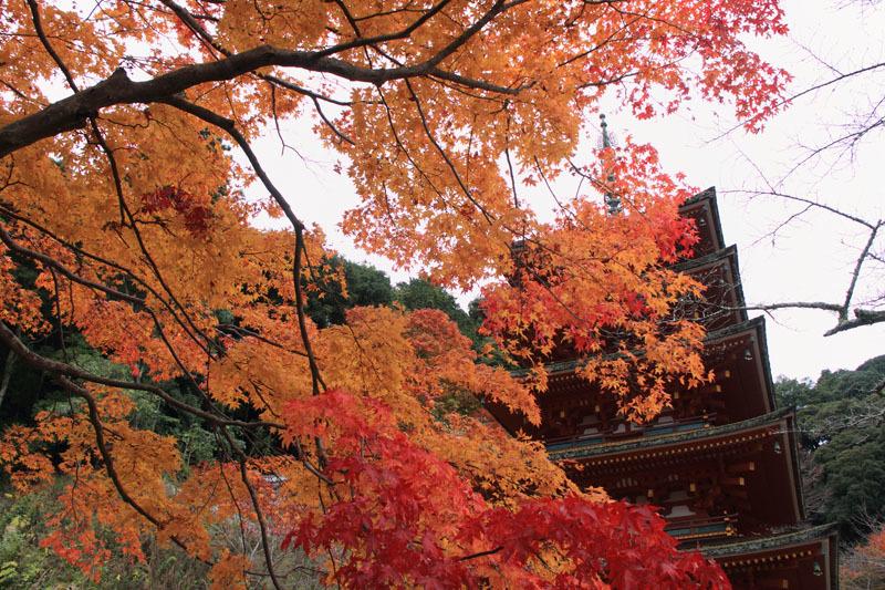 京都、そして奈良_e0367330_20555508.jpg
